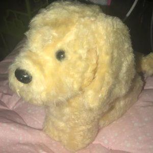 AGD dog- honey